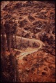 LUMBER ROADS AND CLEAR-CUTTING ENCROACH ON PINE FOREST - NARA - 542949.tif