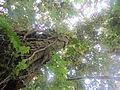 La Amistad Panama Biosphere Reserve - Parque Nacional Volcan Baru (a core zone) 17.JPG