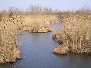 Lomellina - Image: Lago di Sartirana Lomellina, Pavia, Italy Il canneto