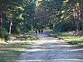 Lake Ride, Swinley Forest - geograph.org.uk - 115301.jpg
