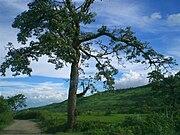 Landscape of Manipur1