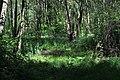 Landschaftsschutzgebiet Osdorf.jpg