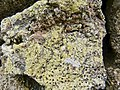 Lanzarote - stones of a wall - pumice stone covered with lichen and sulfur.jpg
