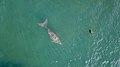 Le Dugong et la Tortue 1 - Thio, plage de Moara, NC.jpg