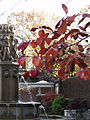 Leaves and fountain in Mellon Park, Pittsburgh.jpg