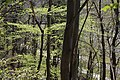 Leitenwälder der Isar 0595.jpg