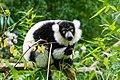 Lemur (24677080788).jpg