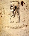 Leonardo da vinci, Male head in profile with proportions.jpg
