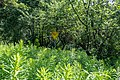 Liebiadziny reserve (Belarus) 02.jpg