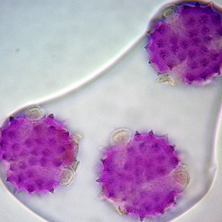 Pollen DNA barcoding