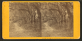 Live Oak Avenue, Bonaventure Cemetery, Savannah, Ga, by John P. Soule 2.png