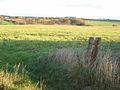 Looking across the valley of the Skerne - geograph.org.uk - 278952.jpg