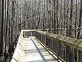 Louisiana Purchase State Park 004.jpg