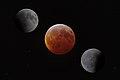 Lunar Eclipse Composite (47034757982).jpg