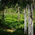 Lush green Corbett.jpg