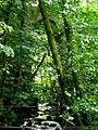 Lustleigh Railway Viaduct - geograph.org.uk - 1470322.jpg