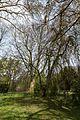 Münster, Park Sentmaring, Naturdenkmal -- 2015 -- 5703.jpg