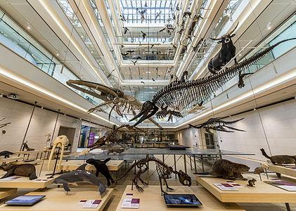 Interior of MUSE - Science Museum in Trento.