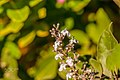 Macro Nature Flower Shots (211357677).jpeg