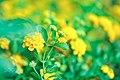 Macro Nature Flower Shots (211357701).jpeg
