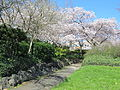 Madison Park, Seattle, April 2012, trees.JPG