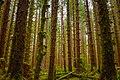 Magical forest (Unsplash).jpg