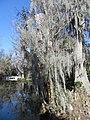 Magnolia Plantation and Gardens - Charleston, South Carolina (8556544700).jpg