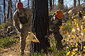 Marine conduct tree-felling operation 141018-M-OD001-011.jpg