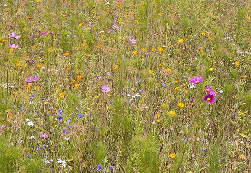 Meadow Flowers (3798373192)