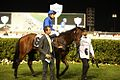 Mental (AUS) at Al Shindagha Sprint.jpg
