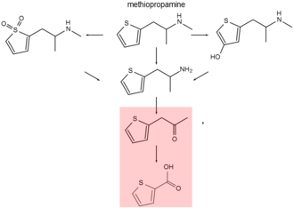 Methiopropamine - Methiopropamine metabolism is somewhat similar to methamphetamine. Hydroxylation, demethylation and deamination are in common. Formation of thiophene ''S''-oxide is different, as is the end product which will probably be (substituted) thiophene-2-carboxylic acid. It is then excreted in urine. Compounds on red are inactive.
