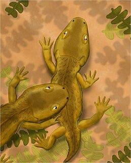 <i>Micropholis</i> (amphibian) genus of amphibian (fossil)