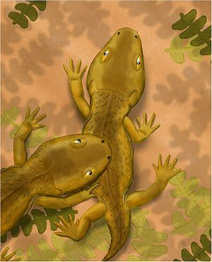 Amphibamidae - Micropholis stowi