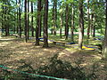 Minigolf u Máchova jezera v Doksech.jpg