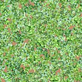 Mixed Weeds Texture Seamless.jpg