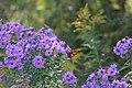 Monarch butterfly at Teen Ranch.jpg