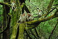 Monkey family in moss tree.jpg
