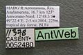 Monomorium termitobium casent0052480 label 1.jpg