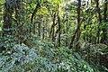 Monteverde Reserve Costa Rica 17.jpg