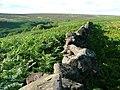 Moor Wall, Tarn Hole - geograph.org.uk - 201305.jpg