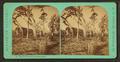 Moss Bluff Landing, Oklawaha River, Florida, from Robert N. Dennis collection of stereoscopic views.png