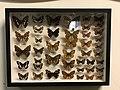 Motyli.jpg