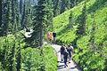 Mount Rainier - Paradise - Moraine Trail - August 2014 - 02.jpg