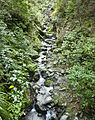 Mt. Crichton Loop Track (5863128042).jpg