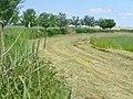 Muendeseer Rundweg - Feldrand (Muende Lake Circular Path - Field Edge) - geo.hlipp.de - 37557.jpg