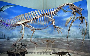 Irritator - Skeleton mounted as attacking a pterosaur