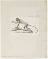 Mycetes seniculus - 1810 - Print - Iconographia Zoologica - Special Collections University of Amsterdam - UBA01 IZ20200142.tif