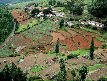 Mysore grassfields.jpg