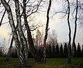 NAŁĘCZÓW SANATORIUM CICHE WĄWOZY 02 - panoramio.jpg