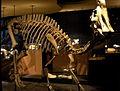 NHM Maastricht, 2011, Hadrosaurus03.jpg